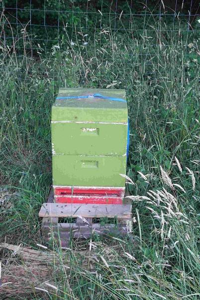 Bienenkasten©Oberschule Steimbke